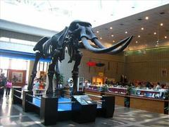 【国立自然科學博物館(コクリツシゼンカガクハクブツカン)】澎湖古象の化石レプリカは原寸大