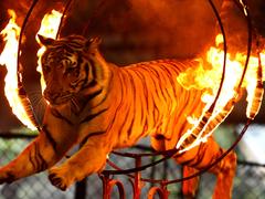 【シーラチャー・タイガー動物園】大人も楽しめるショーの数々