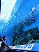【花蓮海洋公園(カレンカイヨウコウエン)】水族館も楽しい