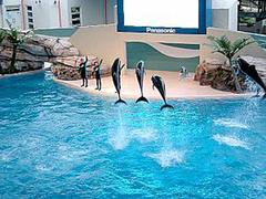 【花蓮海洋公園(カレンカイヨウコウエン)】大人気のイルカのショー