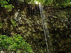 【シダの洞窟】自然の神秘を垣間見られる
