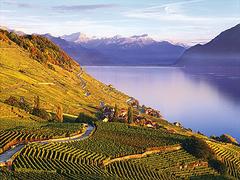 【ラヴォー地区のブドウ畑】山と湖とブドウ畑が織りなす美しい景色
