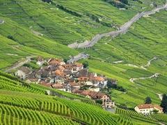 【ラヴォー地区のブドウ畑】ブドウ畑の間にワイン造りの村が点在する