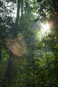 ブキ・ティマ自然保護区