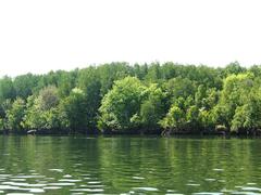 【パンガー湾】マングローブが生い茂る