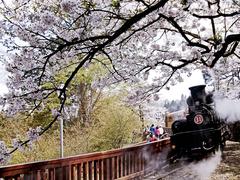 【阿里山】阿里山と列車