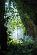 【グヌン・ムル国立公園】ムルの森林