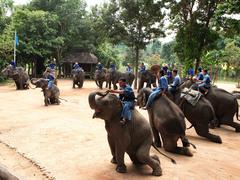 【タイ象保護センター】象達のショーも見学できる