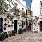 【旧ユダヤ人街】花の小径 (el Consorcio de Turismo de Córdoba提供)
