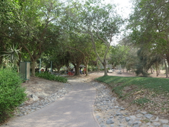 【ジュメイラ・ビーチ・パーク】遊歩道が整備されている
