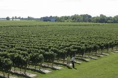 【ナイアガラ・オン・ザ・レイク】ワインの産地としても有名