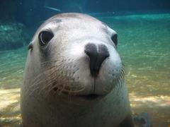 【西オーストラリア水族館】