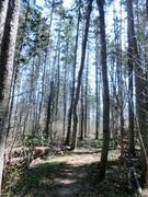 【お化けの森】うっそうと木が茂る森