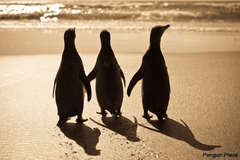 【ペンギン・プレイス】かわいいよちよち歩き