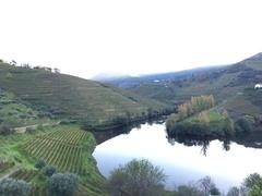 【アルト・ドウロ・ワイン生産地域】斜面を利用した段々畑
