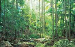 【オーストラリアのゴンドワナ雨林】