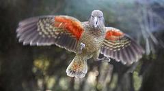 【ウィローバンク野生動物公園】ニュージーランド固有種のケア