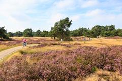 【デ・ホーヘ・フェルウェ国立公園】ヒースの花畑をサイクリング