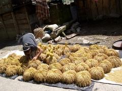 フィリピン・コルディリェーラの棚田群(バナウエ・ライステラス)