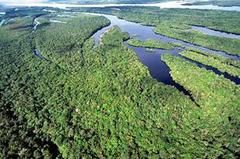 中央アマゾン保全地域群