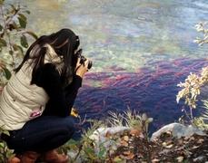 【ロデリック・ヘイグ・ブラウン州立公園】ピーク時には何百、何千という数の鮭が現れる