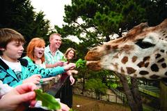 【ウエリントン動物園】オプションで動物にえさをあげることも出来る
