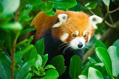 【ウエリントン動物園】かわいらしい動物が身近に見れるかも