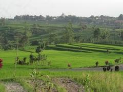 【バリ州の文化的景観:トリ・ヒタ・カラナ哲学に基づくスバック灌漑システム】美しい棚田の景観