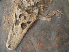 【メッセル・ピットの化石地域】化石