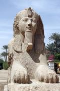 【メンフィスとその墓地遺跡-ギーザからダハシュールまでのピラミッド地帯】メンフィスのスフィンクス