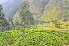 スリランカ中央高原