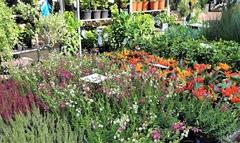 【コロンビア・ロード・フラワー・マーケット】季節の花や植物が驚くほど安く手に入る