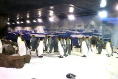 【ケリー・タールトンズ・シー・ライフ・アクアリウム】南極のペンギンコロニーを再現